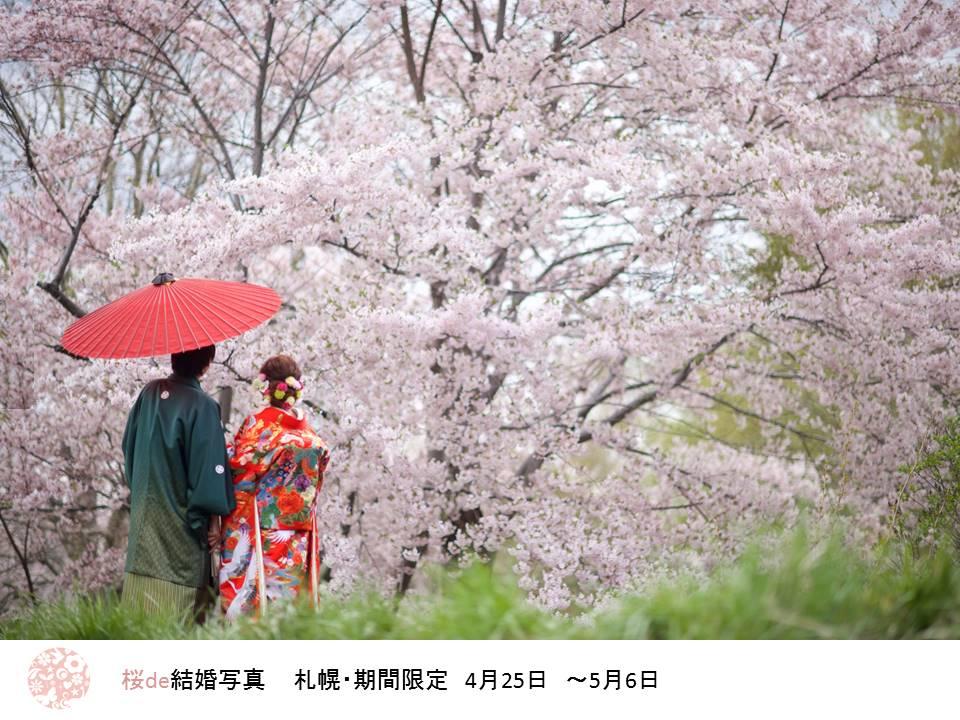 桜限定プラン