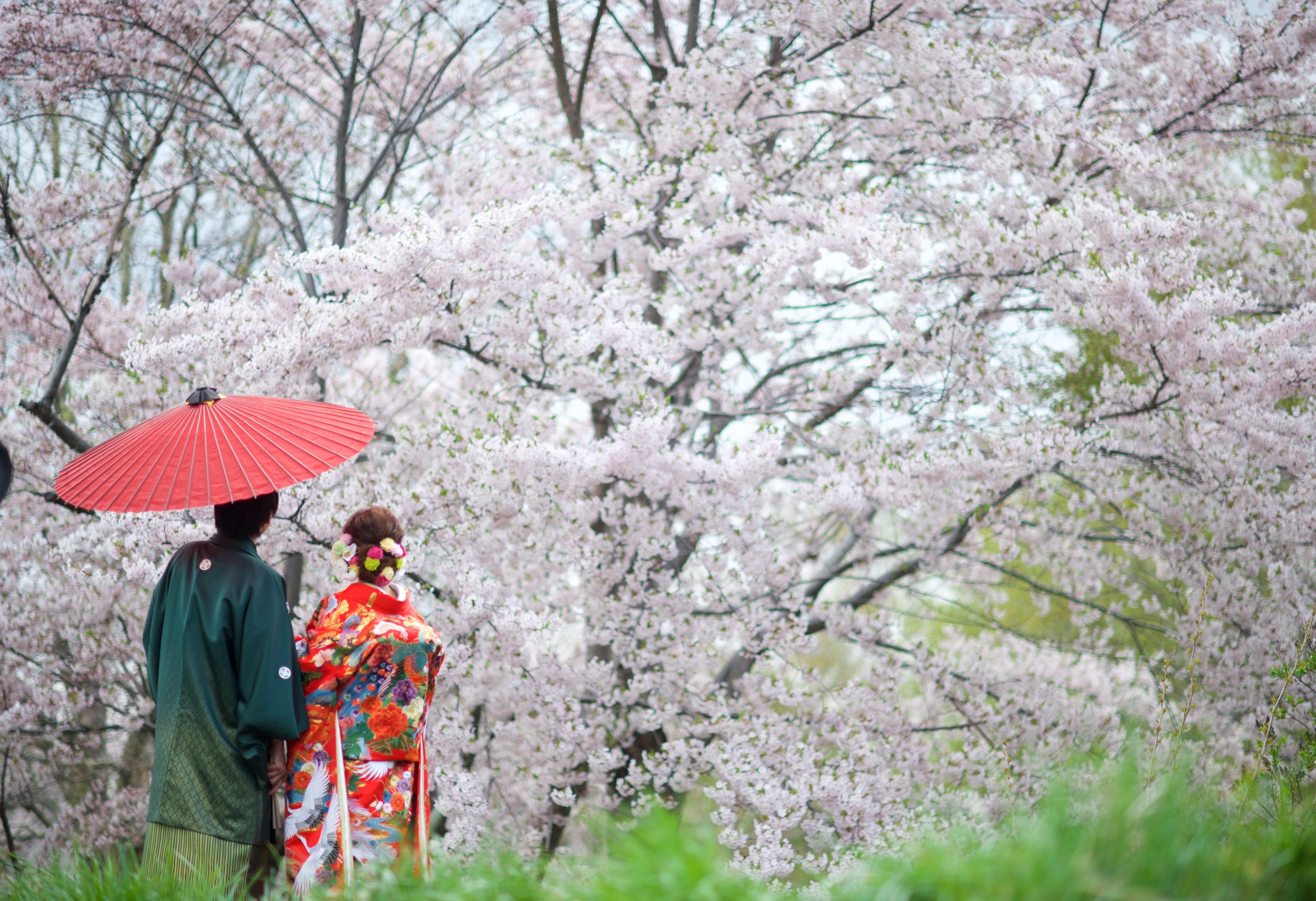 桜のスポットへ移動して撮影