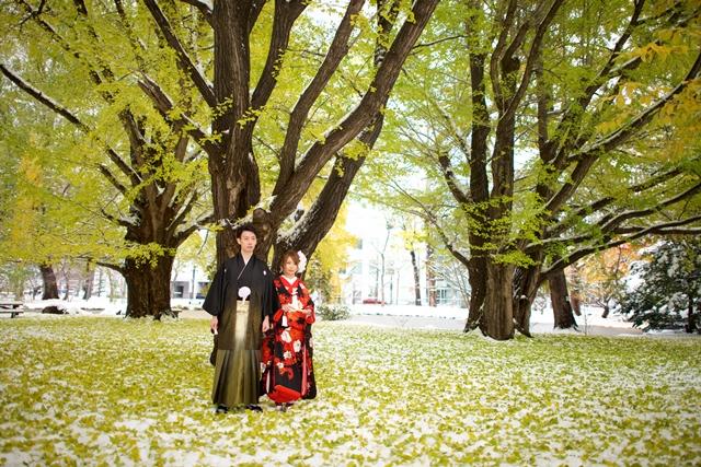 雪と銀杏の葉、紅葉